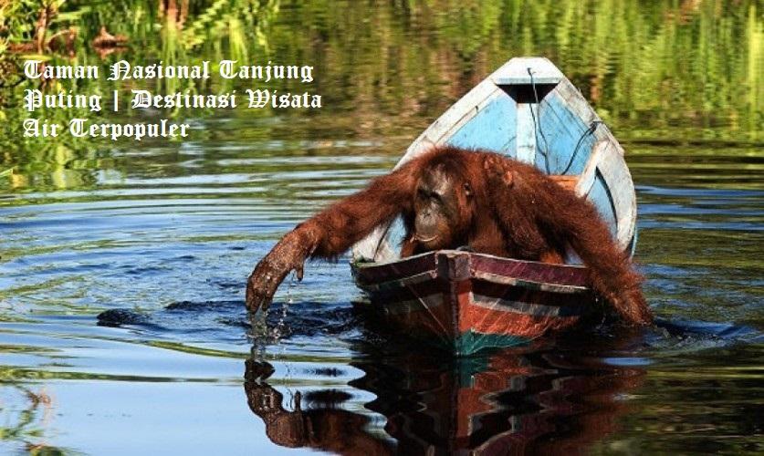 Taman Nasional Tanjung Puting Destinasi Wisata Air Terpopuler